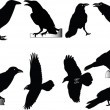 Raven collection - Stock Vector