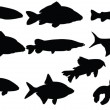 Royalty-Free Stock Vector Image: Fishes collection