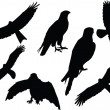 Royalty-Free Stock Vector Image: Falcons collection silhouette