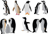 Penguin collection — Stock Vector