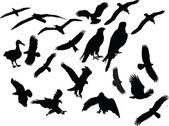 Birds collection silhouette — Stock Vector