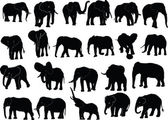 Elephant collection — Vector de stock