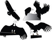 Blizzard head eagle collection — Stock Vector