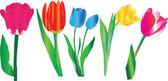 Tulip illustration — Stockvektor