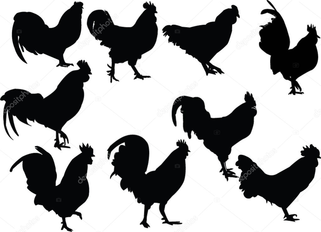 roosters collection - vector — Stockvectorbeeld #2170356