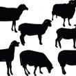Sheep collection - Stock Vector