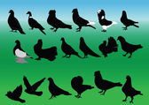 Pigeons collection — Stock Vector
