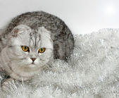 Cat with tinsel — Stock Photo