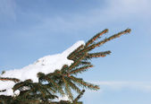 Spruce in snow — Fotografia Stock