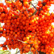 Sea-buckthorn berries — Stockfoto