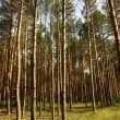 Forest in Summer — Stock Photo