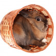 Small rabbit in basket. — Stock Photo