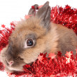 Small rabbit with tinsel. — Zdjęcie stockowe