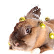 Small rabbit with garland. — Stock Photo