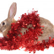 Rabbit with a tinsel — Foto Stock