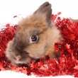 Small rabbit with tinsel. — Foto Stock