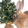 Rabbit with a fur-tree. - Stockfoto