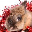 Rabbit with tinsel. — Foto Stock
