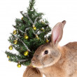Stock Photo: Rabbit with fur-tree, isolated.