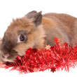 Rabbit with tinsel , isolated. — Foto Stock