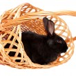 Royalty-Free Stock Photo: Rabbit in a basket.