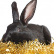 Black rabbit in a tinsel. — Stockfoto