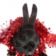 Rabbit in a tinsel. — Stockfoto