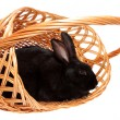 Stock Photo: Rabbit in basket, isolated.