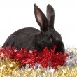 Black rabbit in a tinsel, isolated. — Foto Stock