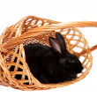 Stock Photo: Black rabbit in basket.