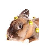 Kleine konijn met garland. — Stockfoto