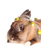 Small rabbit with garland. — Foto de Stock