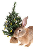 Rabbit with a fur-tree, isolated. — Stock Photo