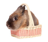 Small rabbit in a basket. — Stock Photo