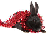 Black rabbit in a tinsel. — Stock Photo