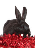 Rabbit in a tinsel, isolated. — Stock Photo