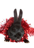 Rabbit in a tinsel. — Stock Photo