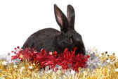 Black rabbit in a tinsel, isolated. — Stock Photo