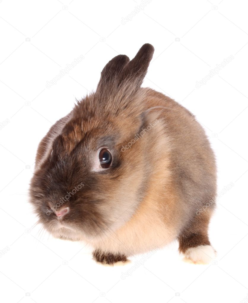 The small rabbit on a white background, is isolated. — Stock Photo #2242949