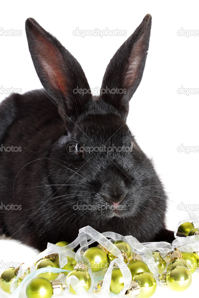 The black rabbit in a toys, on a white background, is isolated. — Stock Photo #2247459