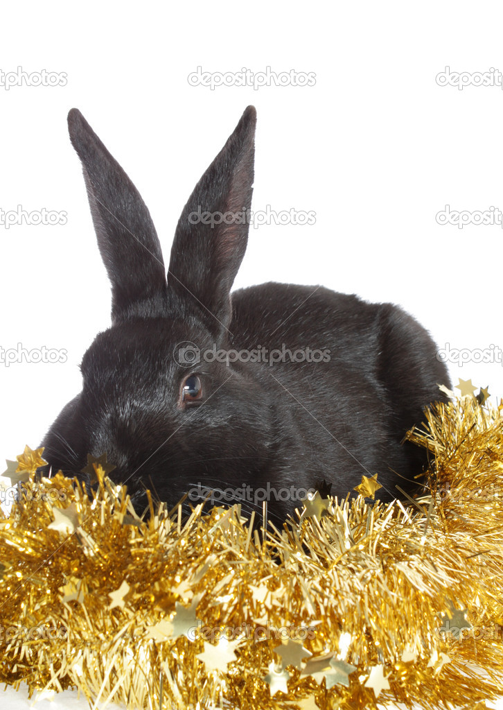 Black rabbit with a New Year's tinsel, is isolated. — Stock Photo #2248401