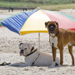 Dogs on a holiday - Stock Photo