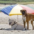 Dogs on a holiday - Stockfoto