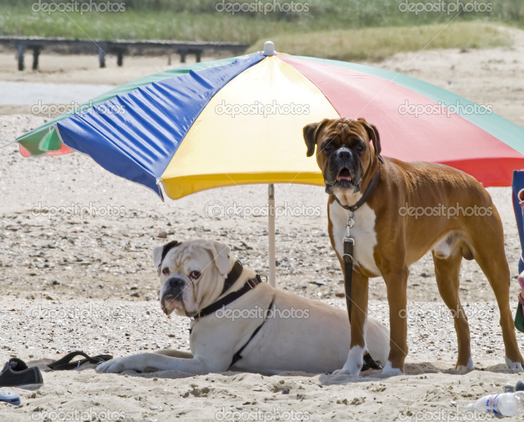 Two dogs on a holiday, relaxing on a beach — Stock Photo #2037373