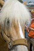 Horse on marketplace — Stock Photo