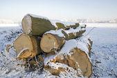 Stacked wood — Stock Photo