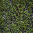 Green Moss on Old Concrete Wall - Stock Photo
