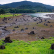 Dead Cut Stumps in Riverbed — Stock Photo #2353285