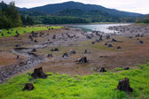 Dead Cut Stumps in Riverbed — Stock Photo