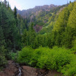 Stock Photo: Mountainside Stream
